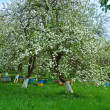 Apiary in a garden of flowering apple-trees by a spring — Stock Photo