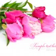 Bunch of purple and pink peonies on a white background — Stock Photo