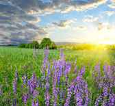 Bright sunset over the wonderful field with flowers — Stock Photo
