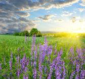 Jasné slunce nad krásné pole s květinami — Stock fotografie