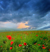 Red poppies on green field, sky and clouds — Stockfoto