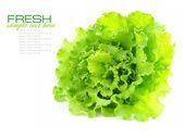 свежий зеленый салат, изолированные на белом фоне — Стоковое фото