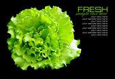 Salada verde fresca isolada no fundo preto — Foto Stock
