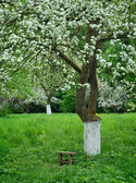 Um banco é em um jardim de primavera — Foto Stock