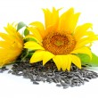 Stock Photo: Yellow sunflowers and sunflower seeds on a white background