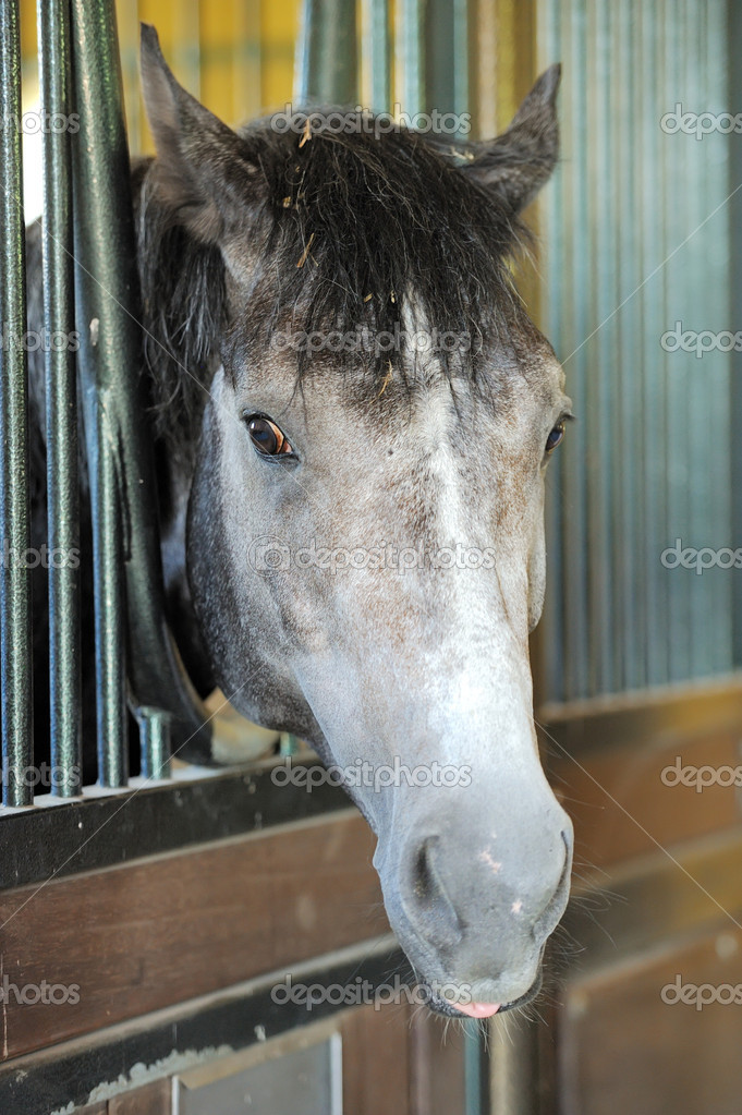 Horse portrait  Stock Photo #11348947