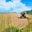 Combine harvester harvesting wheat cereal in farm — Stock Photo #12073613