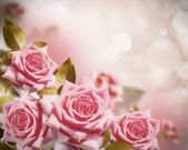 Flowers rose — Stock Photo