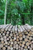 Forest Log Pile — Foto de Stock