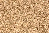 Semillas de arroz — Foto de Stock
