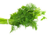 Dill and parsley isolated on a white background — Stok fotoğraf