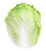 çince lahana beyaz zemin üzerine — Stok fotoğraf