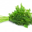 Dill parsley to spices bunch isolated on white background — Stock Photo #11837527