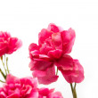 Artificial red flowers on a white background — Stock Photo #11837553