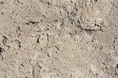 Vulcanic bazalt stone texture — Stock Photo