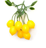 Lemons on a tree on a white background — Stock Photo