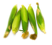 Corn on a white background — Stock Photo