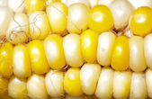 Corn in the background — Stock Photo