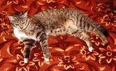 Cat..... — Stock Photo