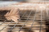 Oak leaf on the background grid — Stock Photo
