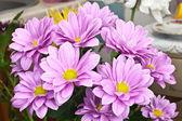 Closed up chrysanthemum — Stock Photo