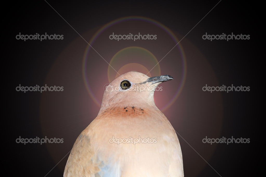 Dove on an abstract background  Stock Photo #11926615