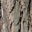 Tree bark in the background — Stock Photo