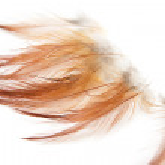 Orange feathers on a white background — Stock Photo #12184036