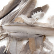 Bird feathers on a white background — Stock Photo #12185132
