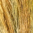 Backgrounds texture of dry grass - Stock Photo