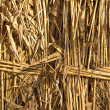Royalty-Free Stock Photo: Yellow reeds in the background