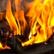 Fire, burning branches of a tree on a barbecue - Stock Photo