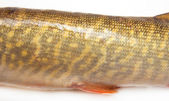 Body of the pike on a white background — Foto Stock