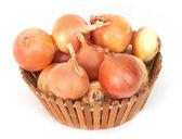 Fresh onions on a white background — Stock Photo