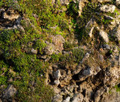 Moss on the concrete . — Stock Photo