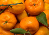 Oranges with leaves as the background — Stock Photo