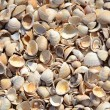 Royalty-Free Stock Photo: Shells Background