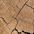 Cracked Wood — Stock Photo