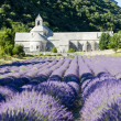 Senanque abbey with lavender field, Provence, France — Stock Photo #10764117