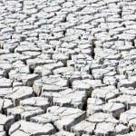 Dry land, Parc Regional de Camargue, Provence, France — Stock Photo #10765451