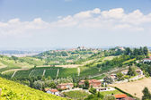 Vineyar near Tana, Asti Region, Piedmont, Italy — Stock Photo
