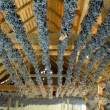 Grapes drying for straw wine (neronet), Biza Winery, Cejkovice, — Stock Photo #10822783