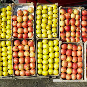 Apples, Serbia — Stock Photo