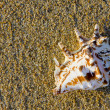 Seashell in the sand — Stock Photo