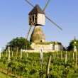 Stock Photo: Windmill and vineyard near Montsoreau, Pays-de-la-Loire, France