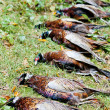 Excludes of caught pheasants - Lizenzfreies Foto