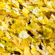 Stock Photo: Autumnal leaves
