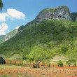 Vinales Valley, Pinar del Rio Province, Cuba — Stock Photo