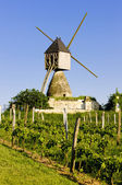 Windmill and vineyard near Montsoreau, Pays-de-la-Loire, France — Stock Photo