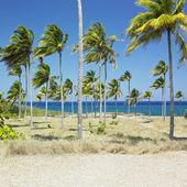 Bahia de bariay, holguin eyaleti, küba — Stok fotoğraf